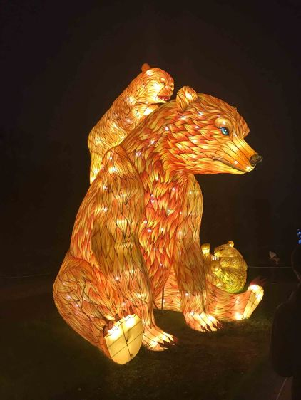 Les ours bruns 🐻